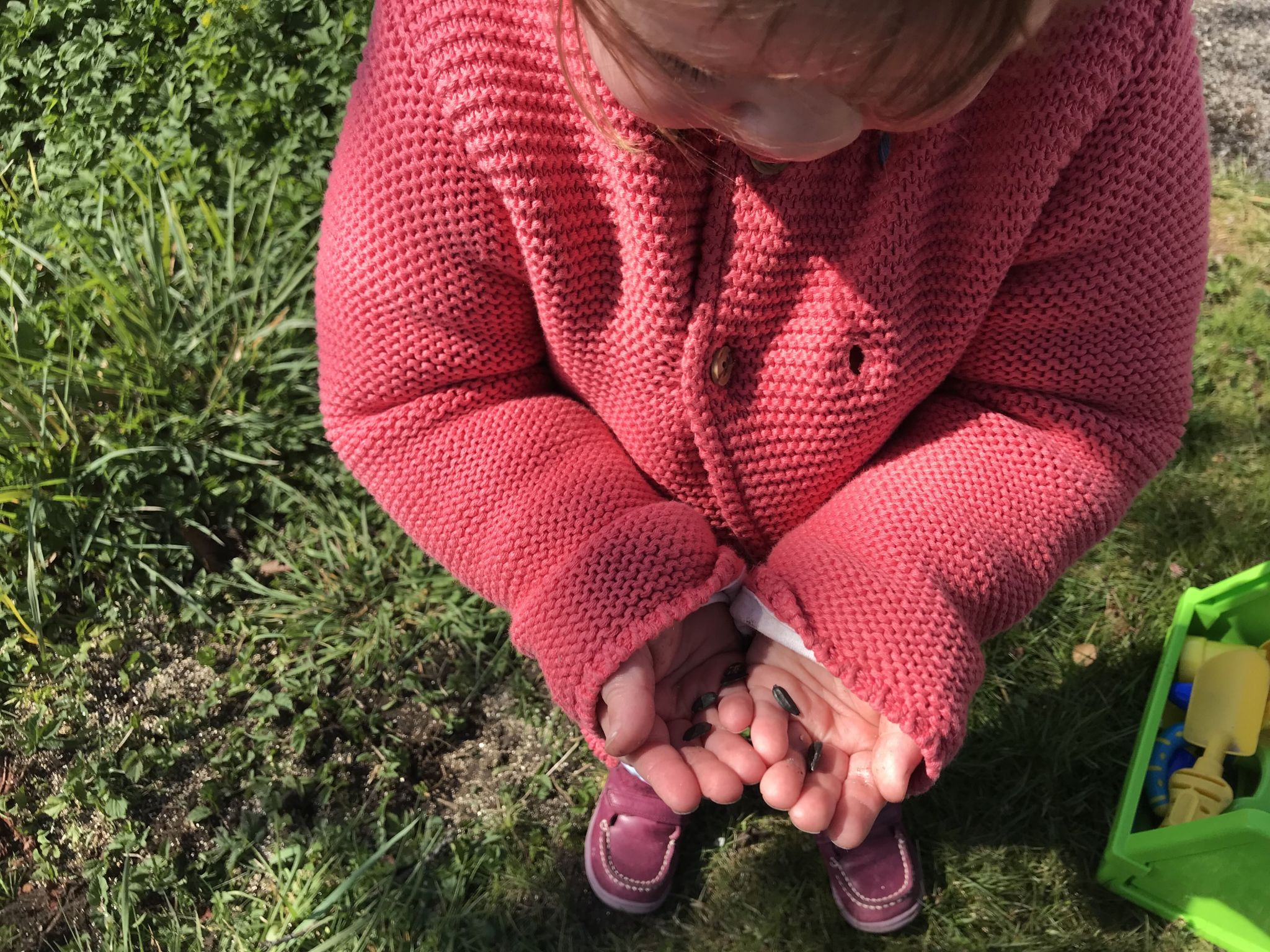 a toddler holding sunflower seeds in her hands