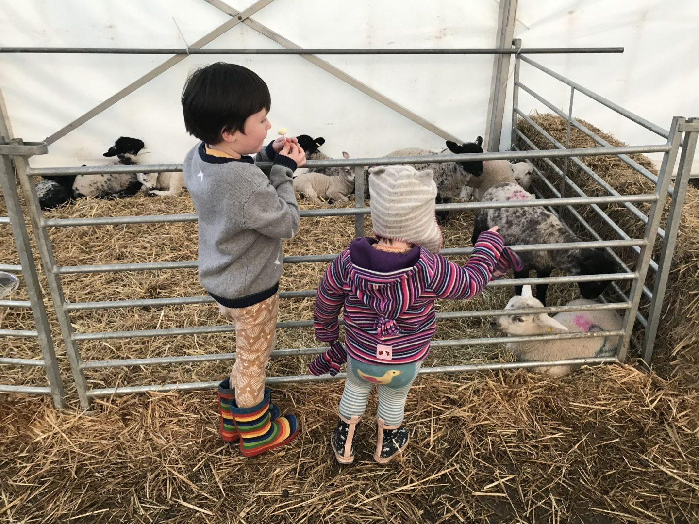 Things to do in Yorkshire this Easter- Two children looking at lambs