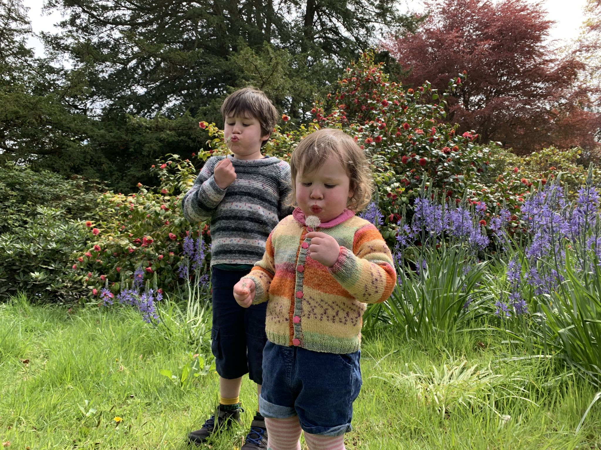 two children blowing dandelion clocks