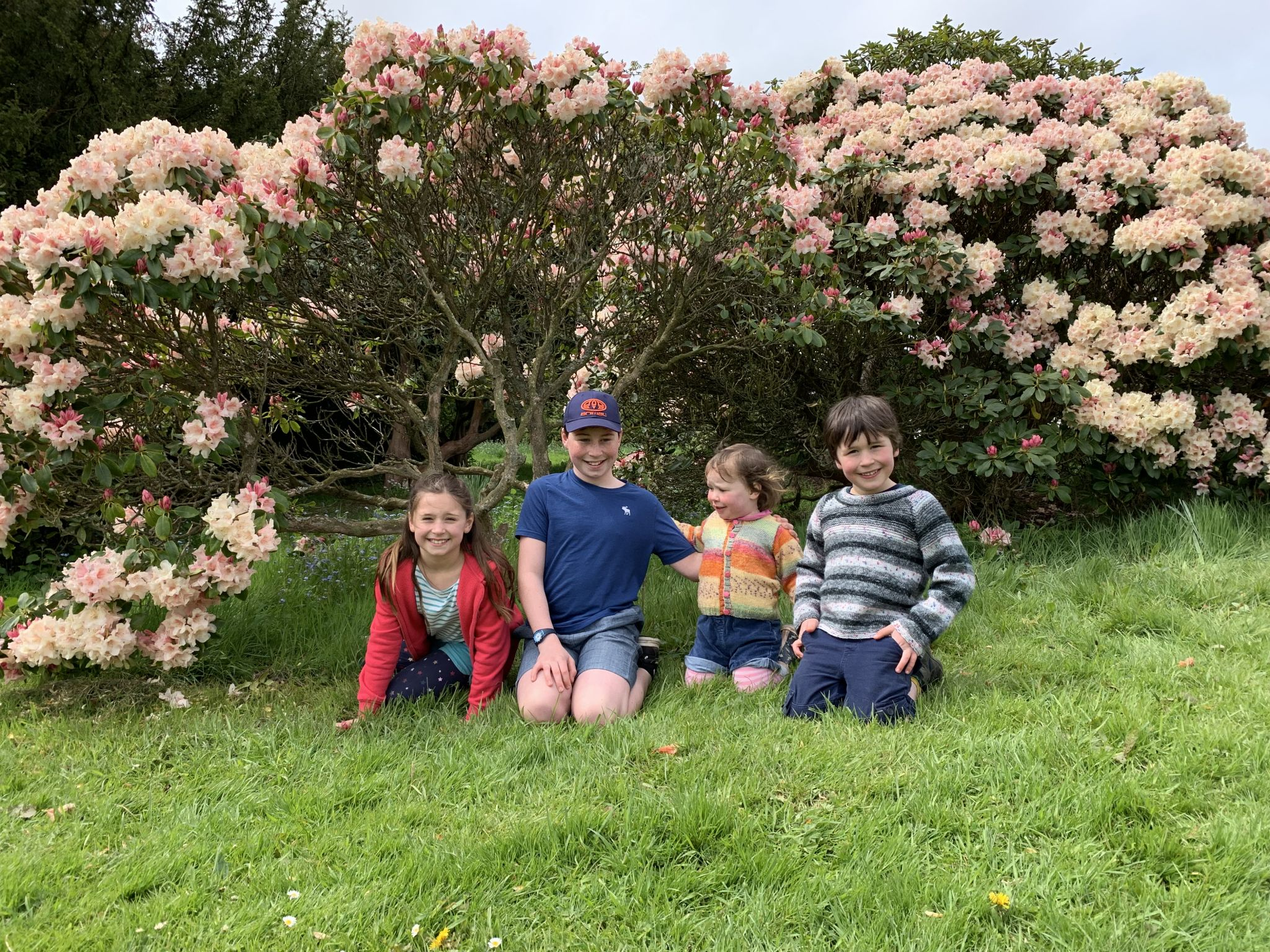 Four children having their photo taken by a pink rhododendron.