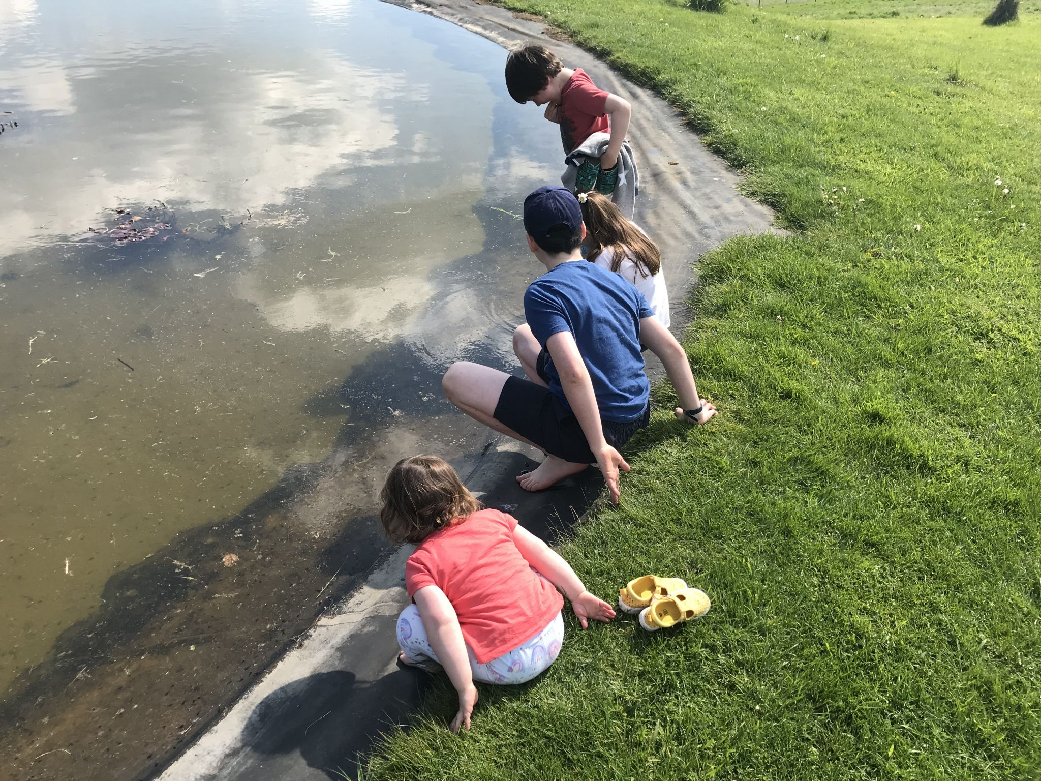 Four children playing in a pond filled with tadpoles