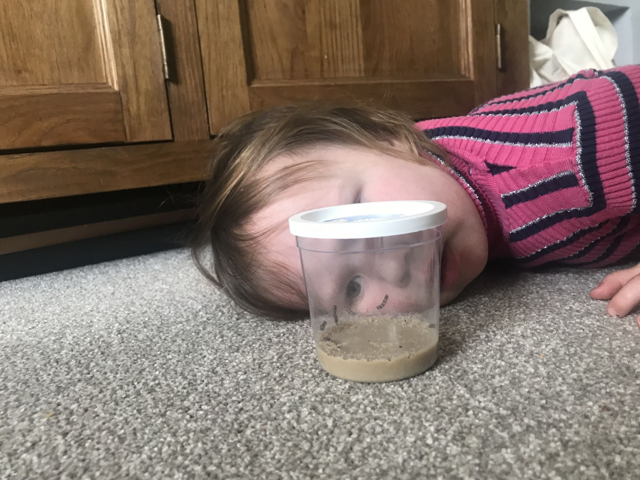 A toddler looking at a cup of caterpillars