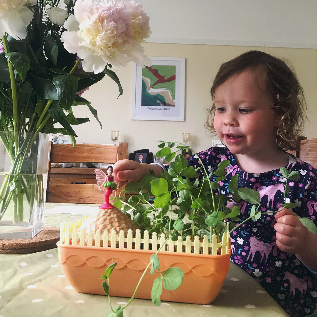 Toddler looking at fairy garden with fully grown pea shoots