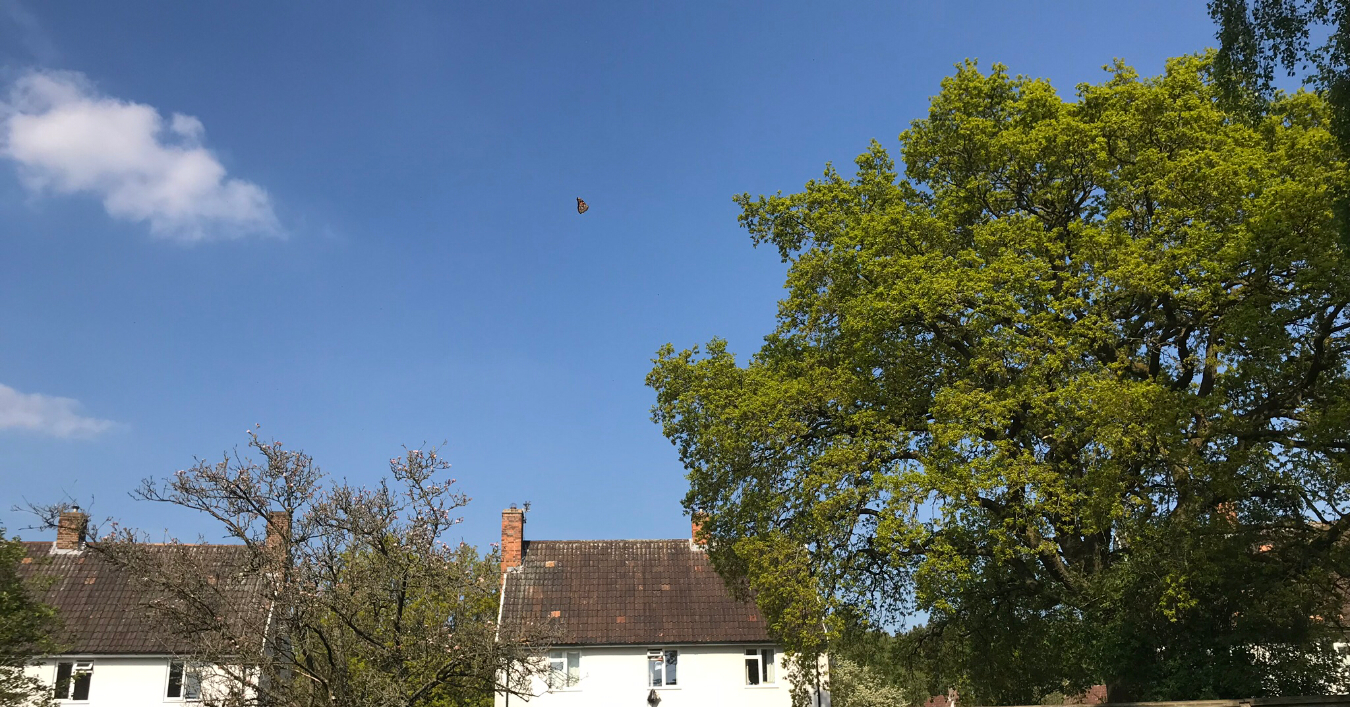The sky and a house with a tiny butterfly in the air