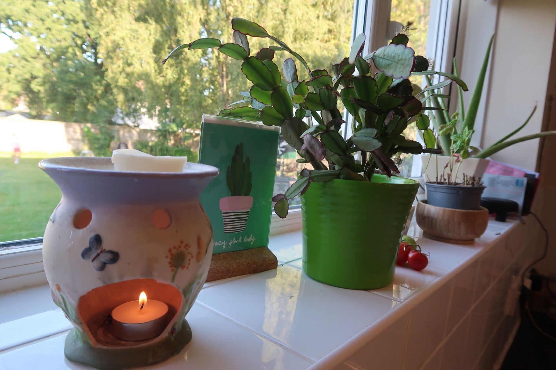 candle burner and plants on a shelf