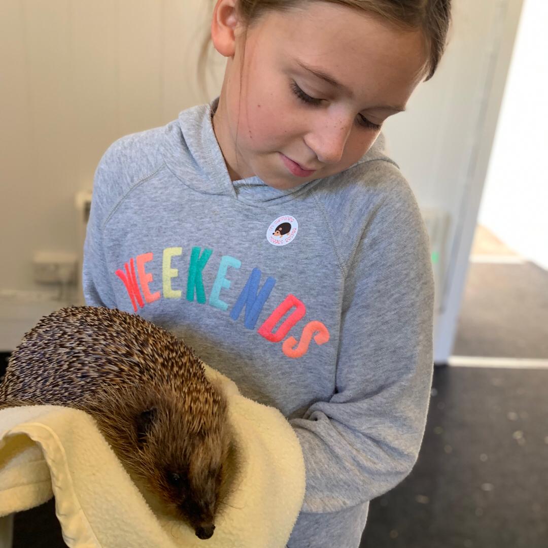 Girl holding a hedgehog