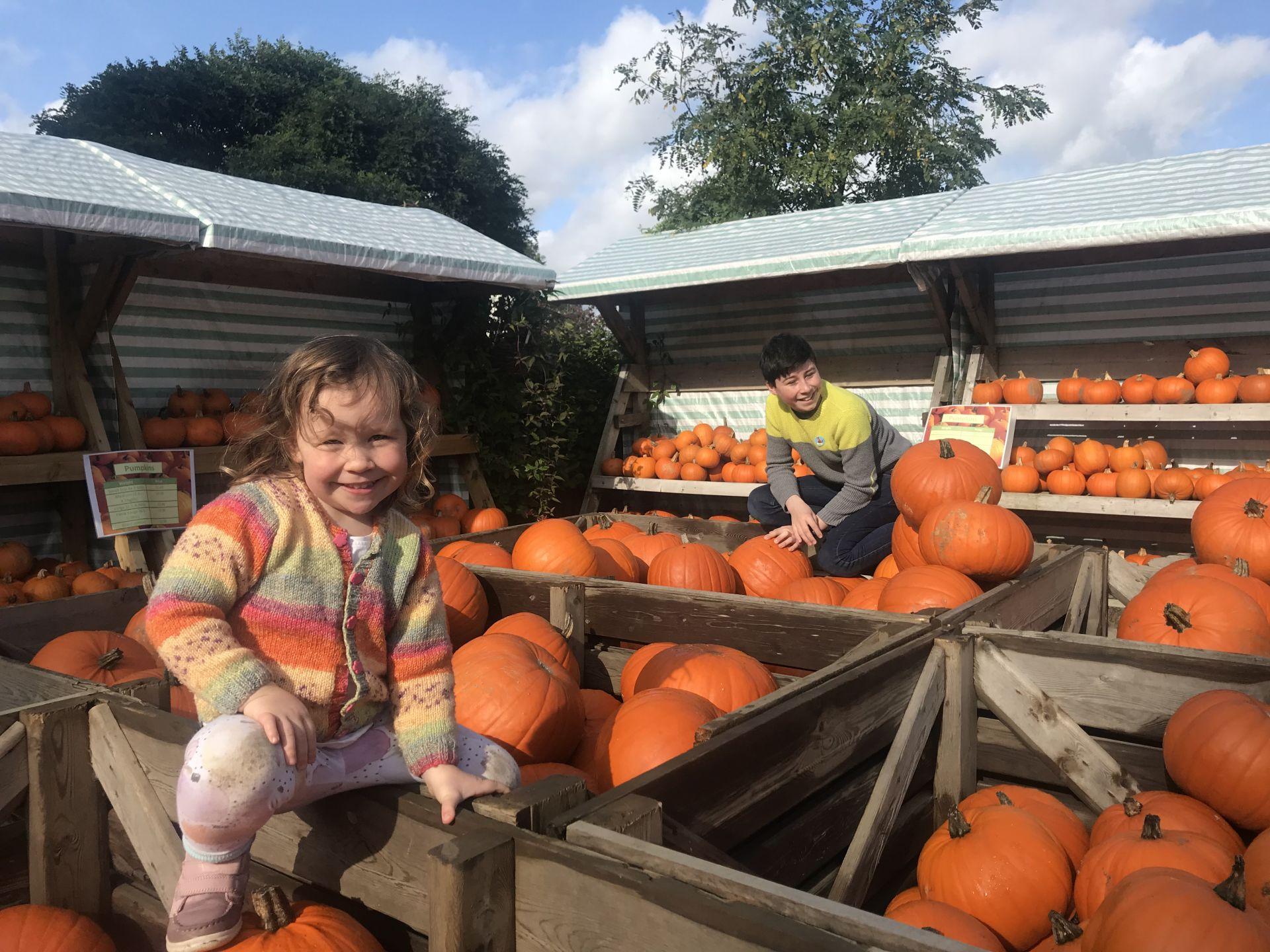 2 ids climbing pumpkins