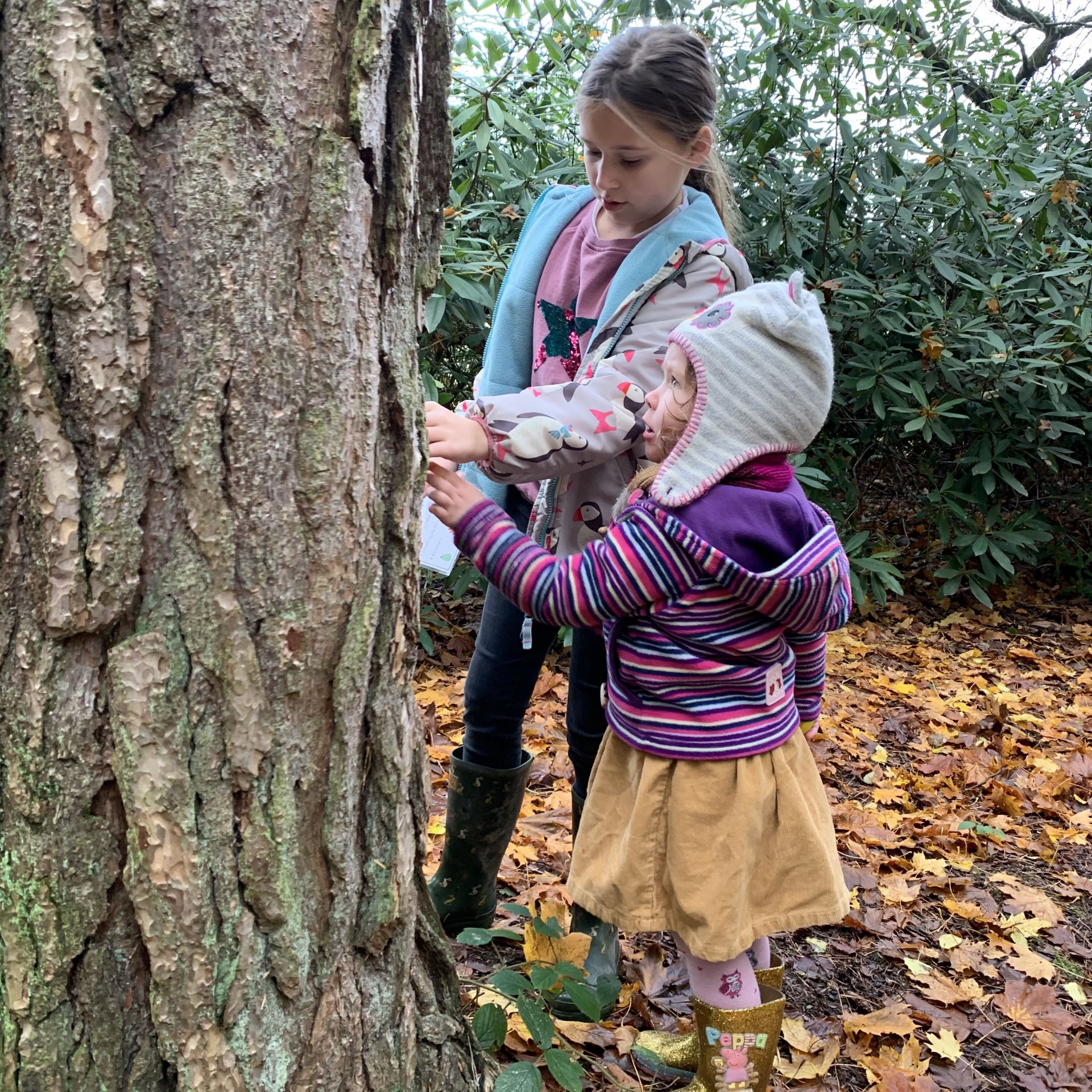 two girls looking at bark on a tree