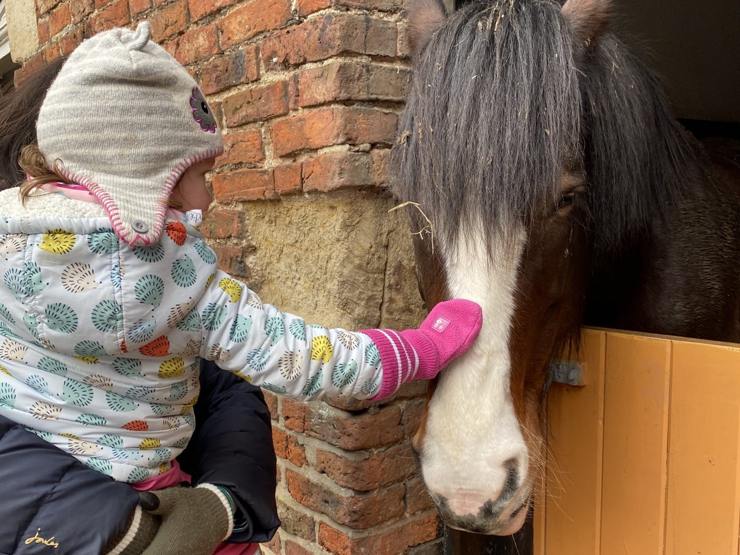 A child stroking a horse in a Yorkshire farm in February Half term