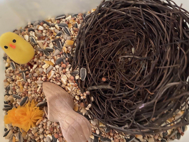 Bird seed sensory tray