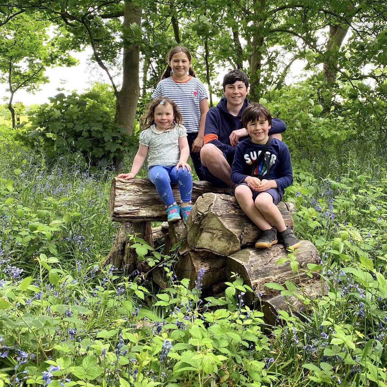 a bluebell wood walk with 4 children on a log