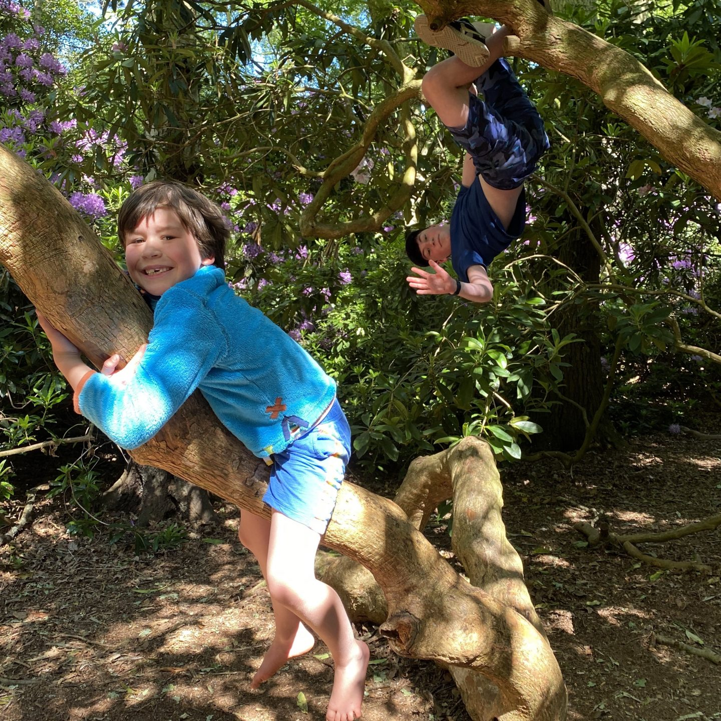 Picnic time with 2 boys climbing a tree