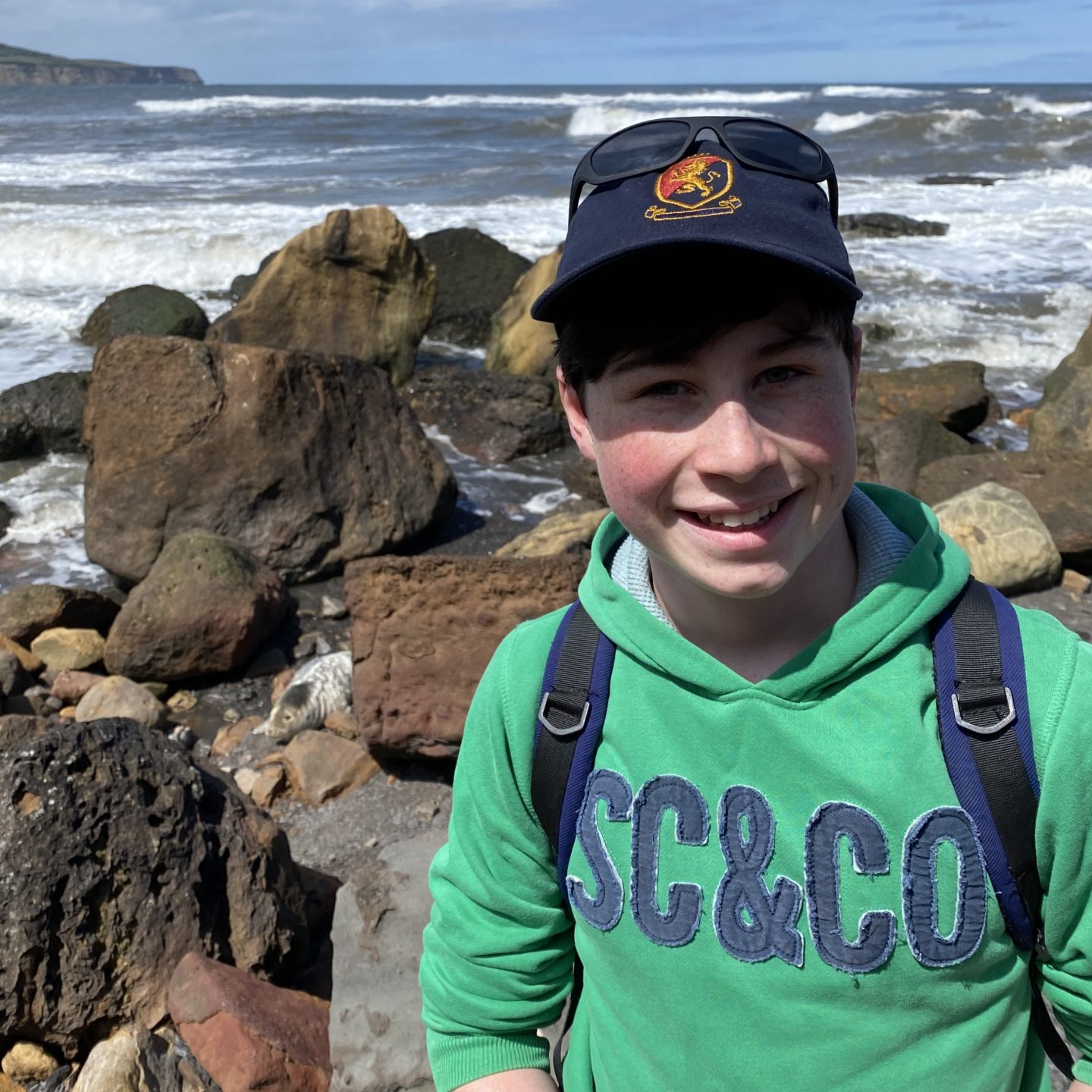 Seals on the Yorkshire coast with a boy down  on the rocks