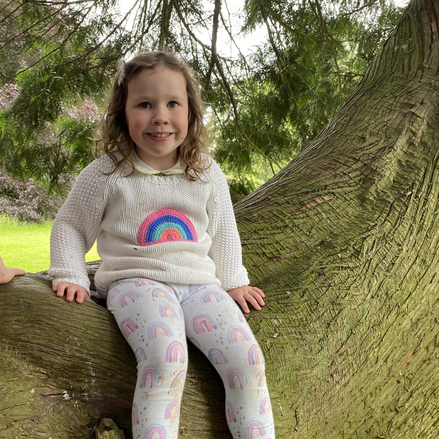 A girl wearing a rainbow jumper sat in a tree