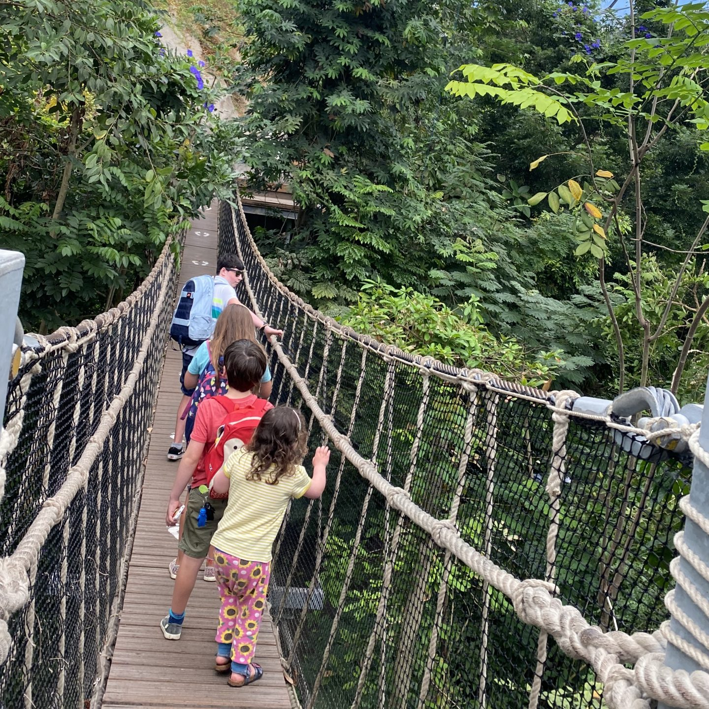 Eden project rainforest biome with 4 children walking the rope bridge