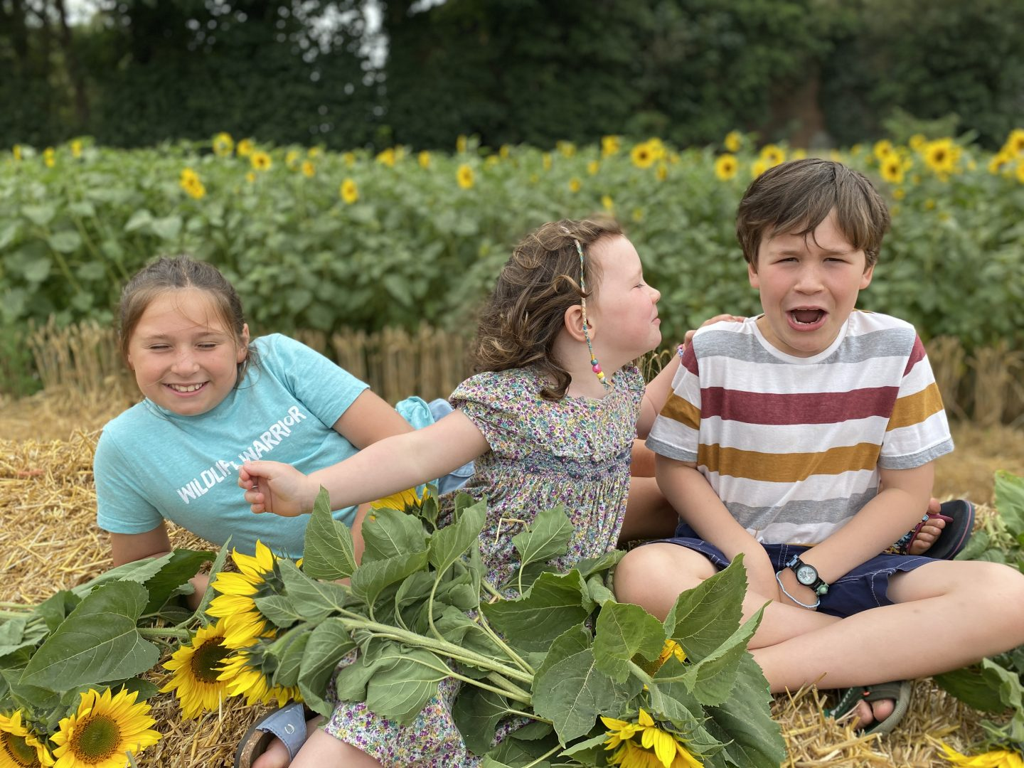 Sunflower field in York with 3 children  on a hay bale