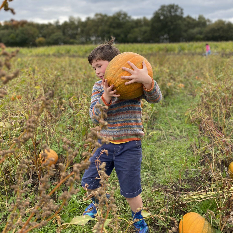 A boy carrying a large pumpkin in a field