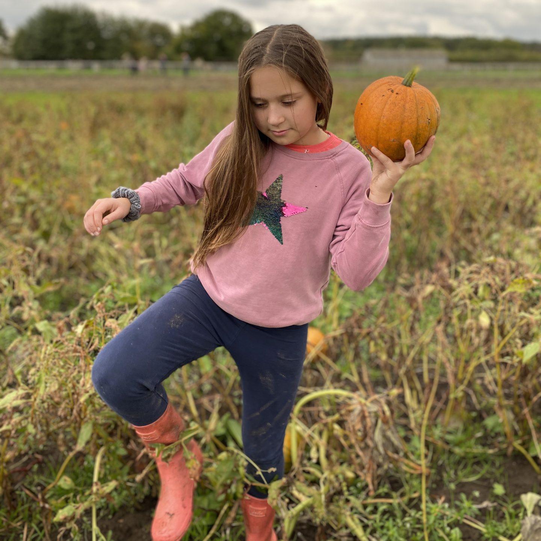 Piglets pumpkin festival  with a girl carrying a pumpkin