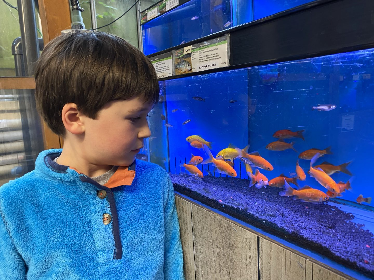 A boy looking at a fish tank on a slow autumn weekend at home