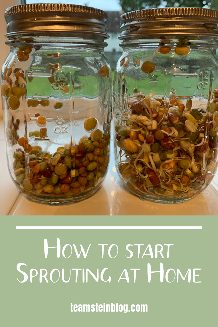 How to start sprouting at home  Pinterest pin